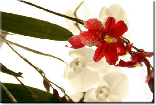 obrazy kwiat