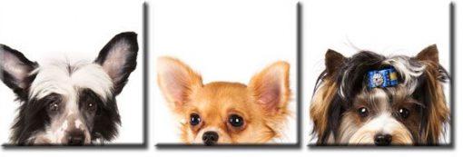 obraz tryptyk psy