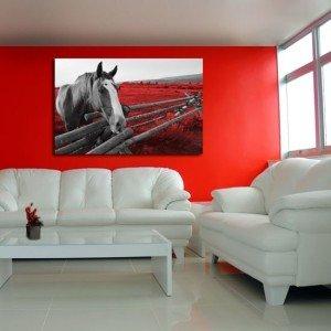 obraz koń w czerwieni