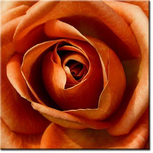 obrazy z herbaciana różą