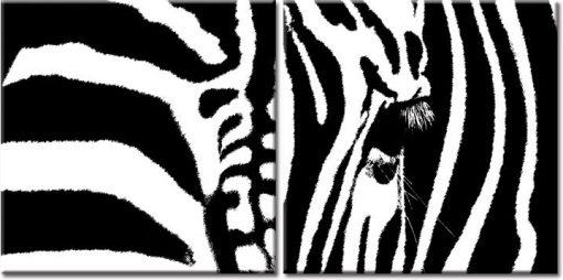 obrazy z zebrami
