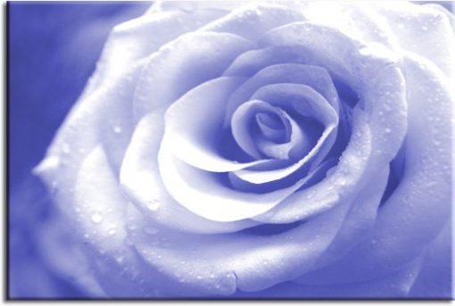 obrazy z różą