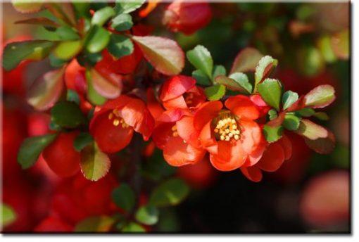 obrazy z kwiatuszkami