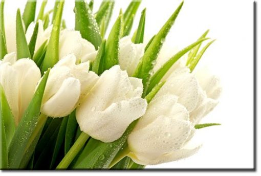 obrazy z tulipanami