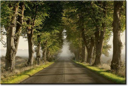 obrazy z drogą