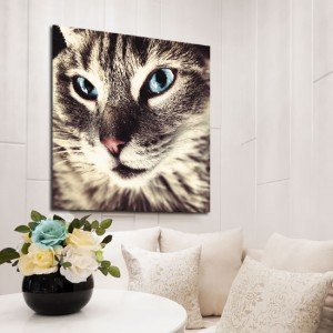 obraz kot z niebieskimi oczami