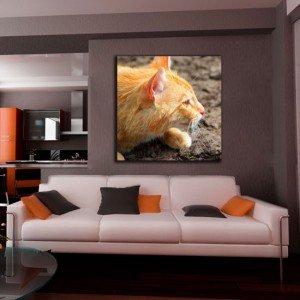 obraz słodki kotek