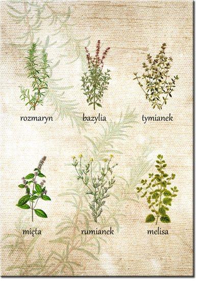obrazy z roślinami