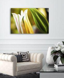 obrazy z lilią