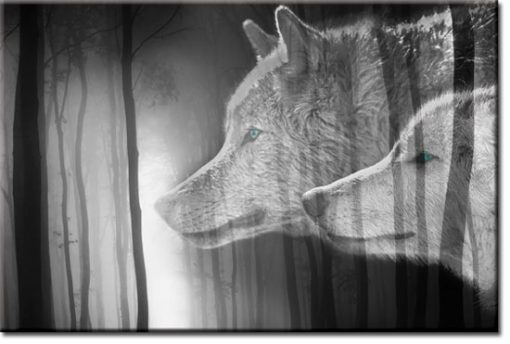 nowoczesne obrazy ze zwierzętami