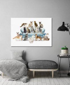 obraz koty na sofie