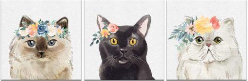 obraz koty różnych ras