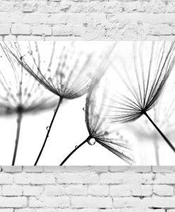 Obraz czarno-biały z dmuchawcami