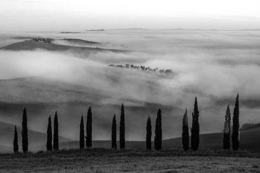Obraz - Czarno-biały krajobraz z drzewkami