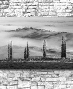 czarno-biały obraz cyprysowa aleja we mgle