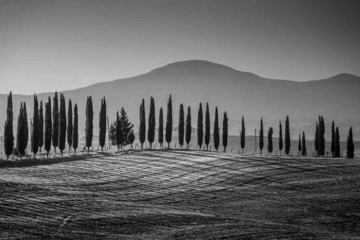 Szary obraz z motywem gór i drzew