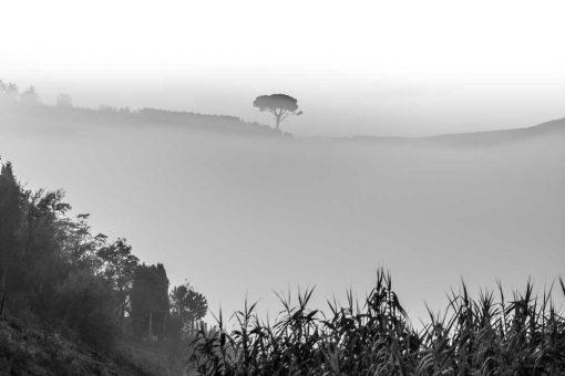 Obraz z czarno-białym drzewem we mgle