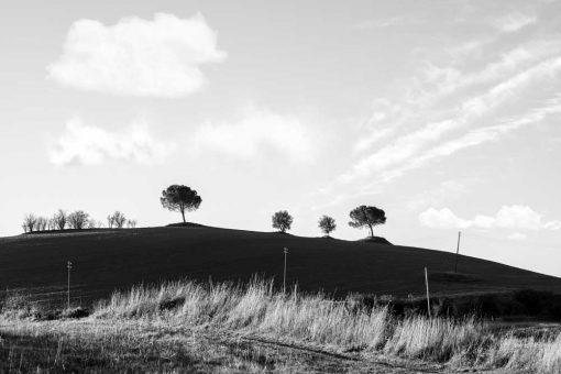 Obraz cztery drzewa na wzgórzu