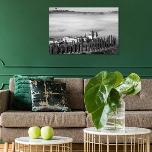 Obraz plantacja oliwek w Toskanii